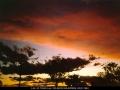 19931122jd02_humilis_schofields_nsw