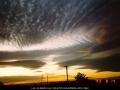 19930814jd01_undulatus_schofields_nsw