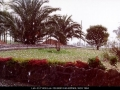 19970920jd12_hail_stones_schofields_nsw
