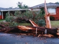 19990829jd09_storm_damage_fairfield_west_nsw
