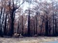 20021103mb07_wild_fire_tenterfield_nsw