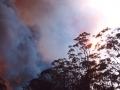 20021204jd09_wild_fire_glenorie_nsw
