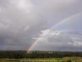 20070407jd03_rainbow_pictures_schofields_nsw