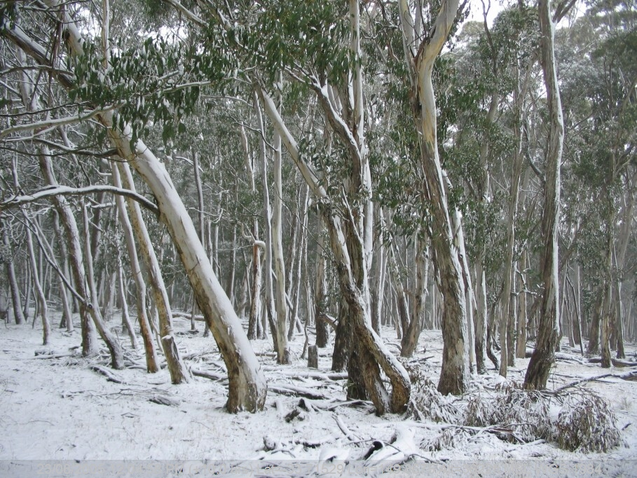 20050623jd69_snow_pictures_near_oberon_nsw