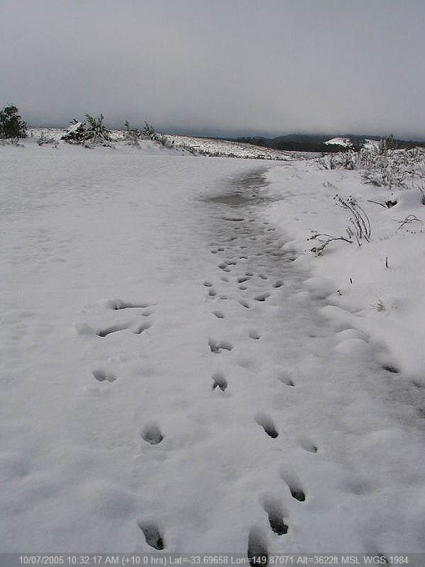 20050710jd10_snow_pictures_near_oberon_nsw