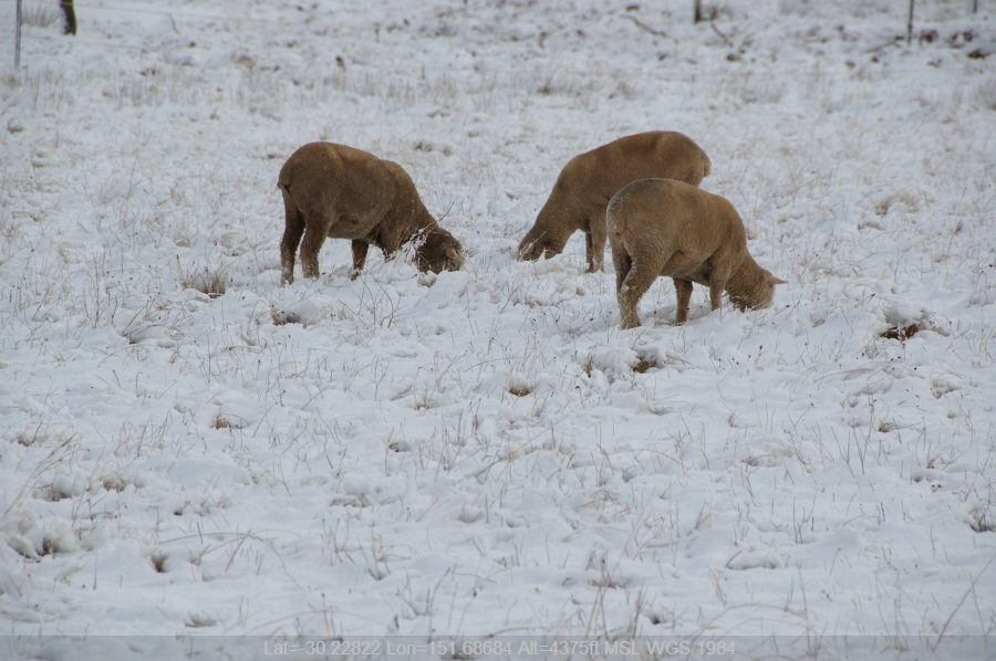 20080518mb64_snow_pictures_guyra_nsw