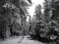20050710jd29_snow_pictures_near_oberon_nsw