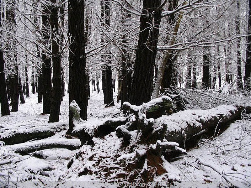 Gallery: Snow Pictures