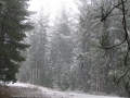20050810jd017_snow_pictures_near_shooters_hill_nsw