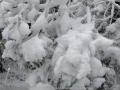 20080518mb94_snow_pictures_ben_lomond_nsw