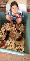 How many kittens Jimelle?