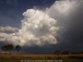 20060220jd03_cumulonimbus_calvus_gulgong_nsw
