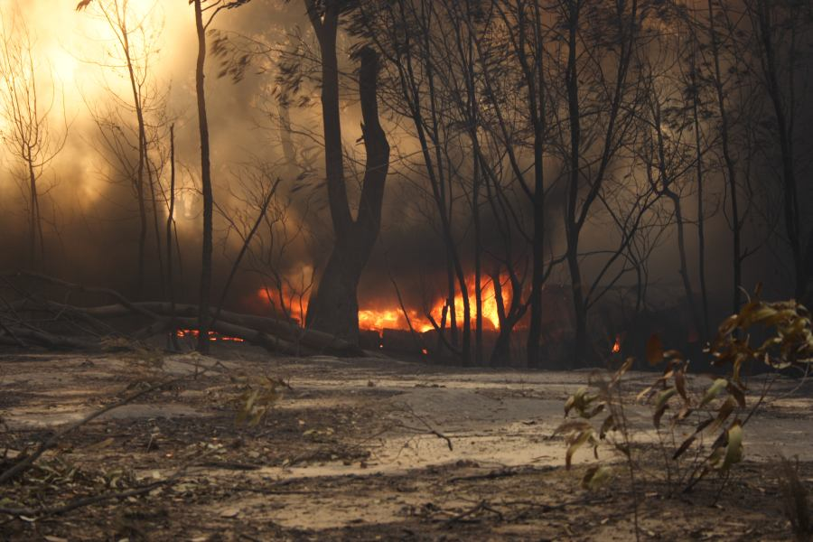20060924jd57_wild_fire_pacific_park_nsw