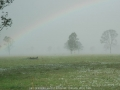 20041109mb50_rainbow_pictures_leeville_nsw
