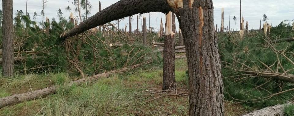 Tornado damage rated EF3 South Africa